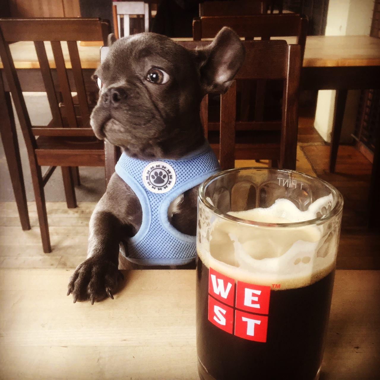 Best Pub Food In Perth Scotland